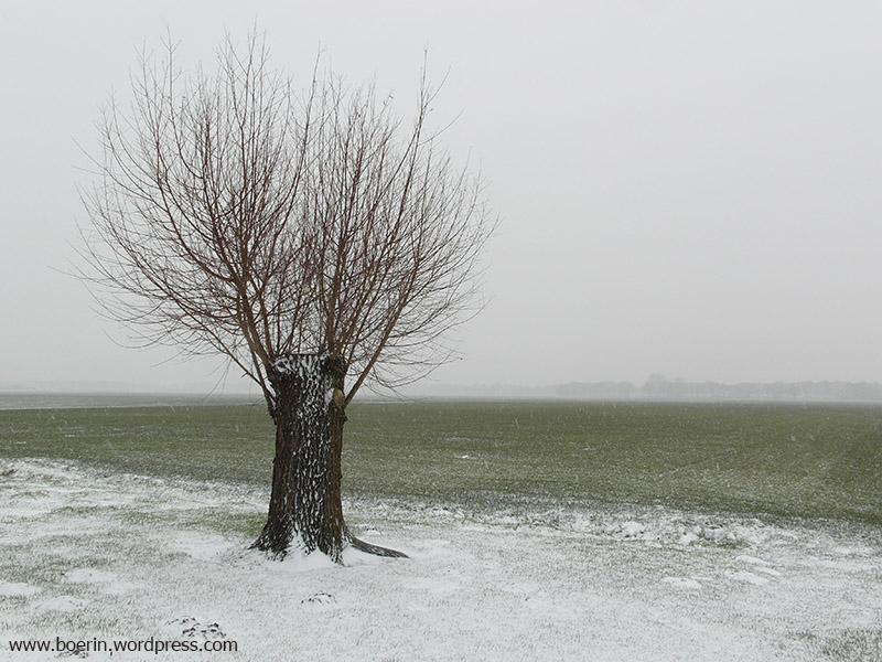 sneeuw 04012016 (1)